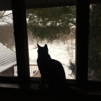 Midnight Mutts: Silhouette Cat