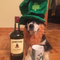 Howlidays: Irish Coffee Day