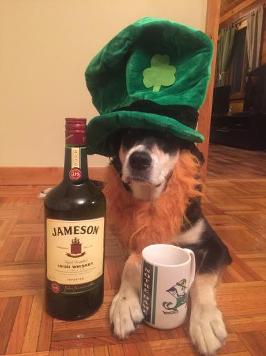Irish Coffee Dog