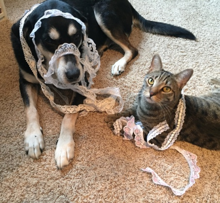 Lace Cat and Dog