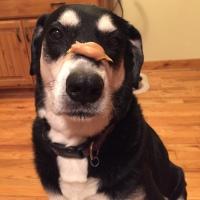 Howlidays: Peanut Butter Day