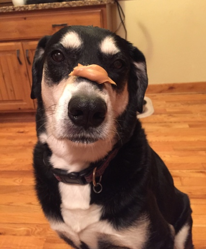 Peanut Butter Dog