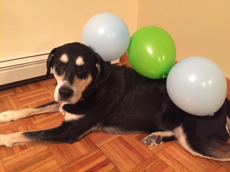 Static Electricity Balloon Dog