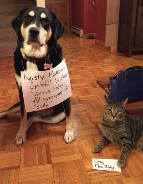 Thesaurus Cat and Dog
