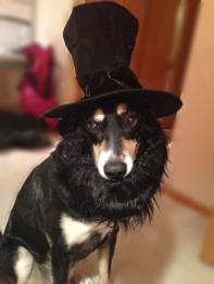Abraham Lincoln Dog