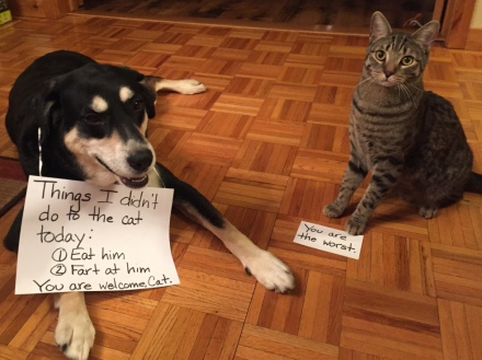 Acts of Kindness Dog and Cat