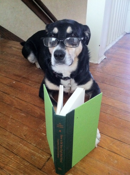 Book Reading Dog