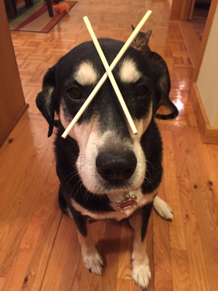Chopsticks Dog