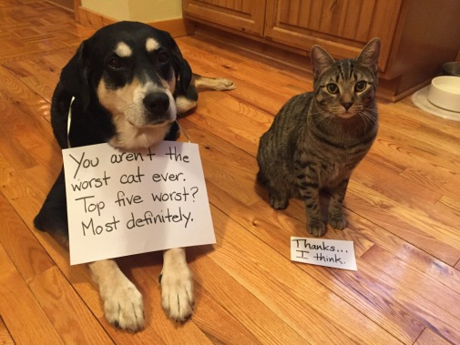 Compliment Cat and Dog