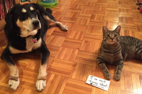 Dog Biscuit Dog and Cat