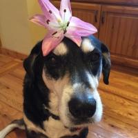 Howlidays: Floral Design Day