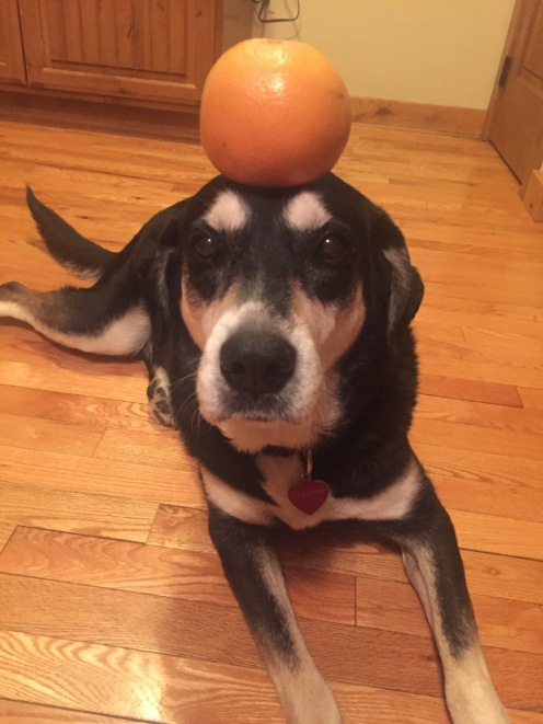 Grapefruit Dog