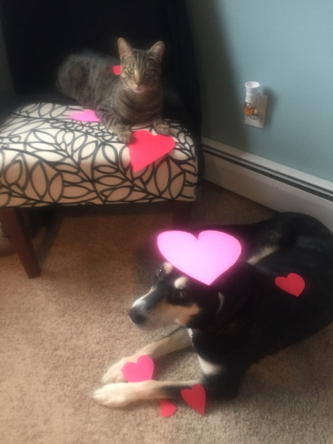 Heart Dog and Cat