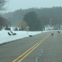 Weekend Wildlife: Wisconsin Winter Traffic Jam