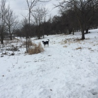 Midnight Mutts: February Walk in the Snow