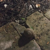 Weekend Wildlife: Florida Snail