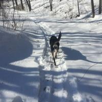 Dog Walk Challenge: Days 1,391 to 1,397