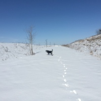 Midnight Mutts: February New Snow