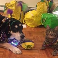 Howlidays: Mardi Gras
