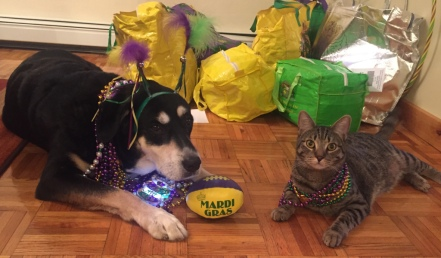 Mardi Gras Dog and Cat