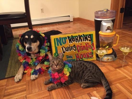 Margarita Dog and Cat