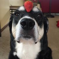 Howlidays: Strawberry Day