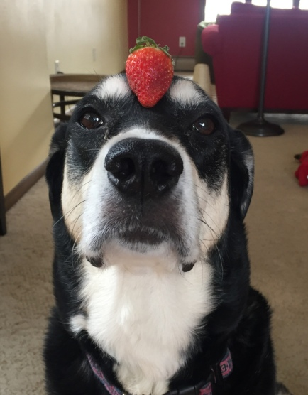 Strawberry Dog