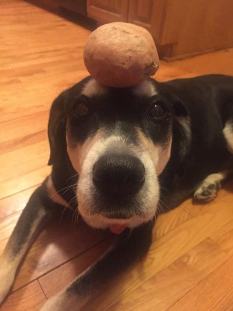 Sweet Potato Dog