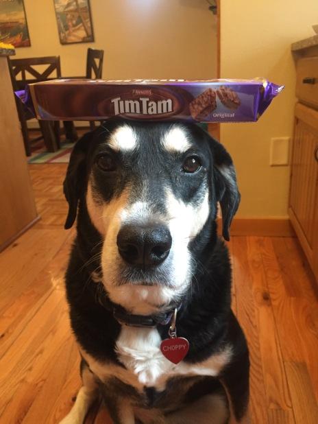 Tim Tam Dog