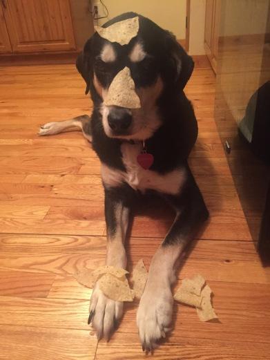 Tortilla Chip Dog