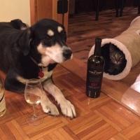 Howlidays: Drink Wine Day