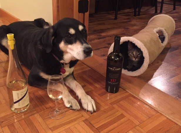Wine Dog and Cat