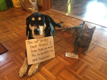April Fool Dog and Cat