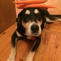 Howlidays: Carrot Day