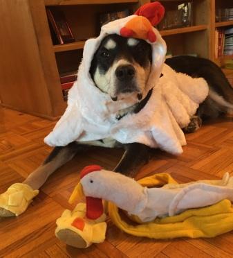Chicken Dog