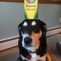 Howlidays: Crayola Crayon Day