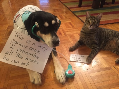 Doctor Dog and Cat