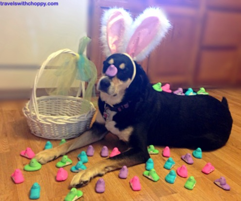 Easter Peeps Dog