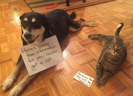 FOIA Dog and Cat