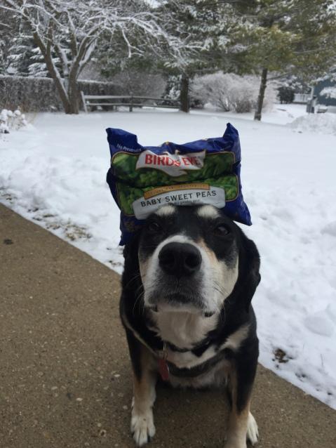 Frozen Food Dog