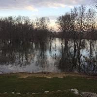 Backyard View: March 2020