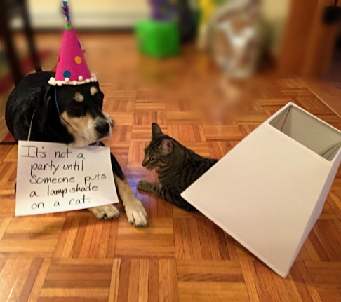 Party Dog and Cat