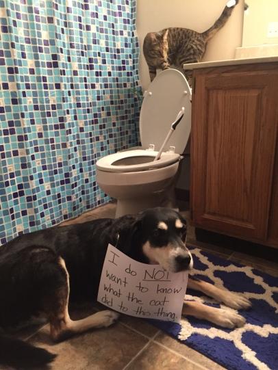 Plumbing Cat and Dog