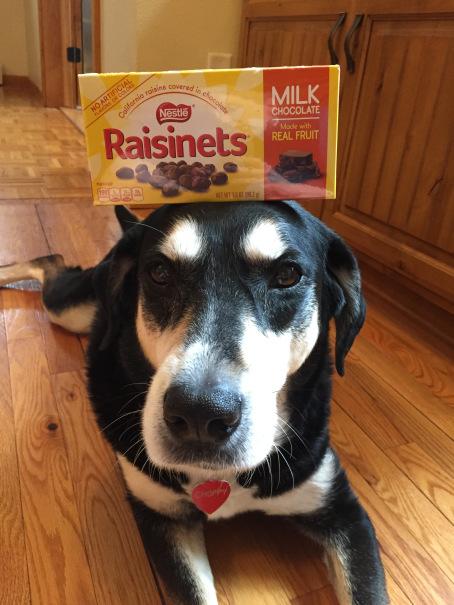 Raisinets Dog