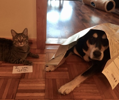 Roadmap Dog and Cat