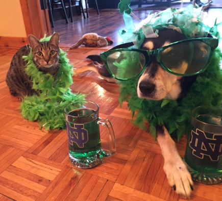 St. Patrick's Day Dog and Cat