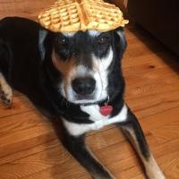 Howlidays: Waffle Day