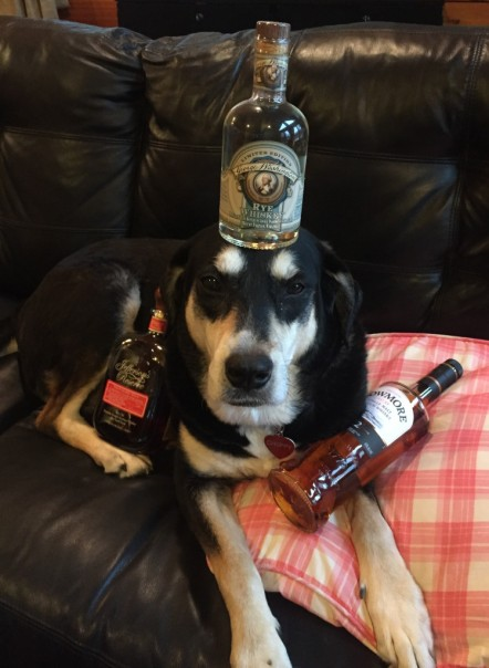 Whisky Dog