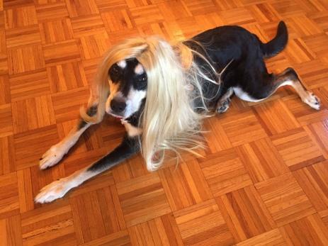 Wig Dog