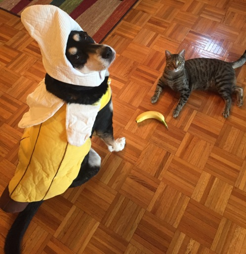 Banana Dog and Cat
